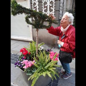 Festival di Sanremo | Addobbi floreali in Corso Matteotti
